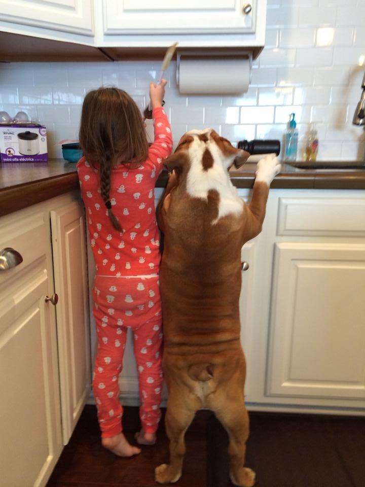 The Bulldog ❤ Sister's little helper.