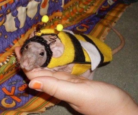 Arı Maya Olan Hayvanlar  Bu güzel sevimli hayvanlar sahipleri tarafından arı kostümü giydirilerek farklı bir tarz yaratmak istemişler.Bir zamanlar arı maya vardı sanırım bu kişiler o çizgi film kahramanının ciddi bir hayranı olsa gerek.Ne olduğunu bile anlamayan bu güzel yaratıklar şaşkın ifadeleri ile güldürüyor.İşte bi... Eklendi, Daha fazlası için Soosyo'ya Gel!