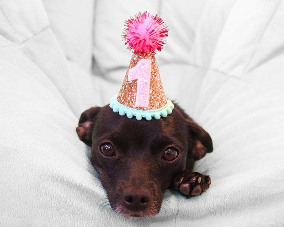 Dog Party Hat Mini Birthday Hat For Puppy Party Pet Birthday Hat Pet Puppy Cat Kitten Pig Birthday Par Dog Birthday Hat Dog Party Hat Birthday Party Hats