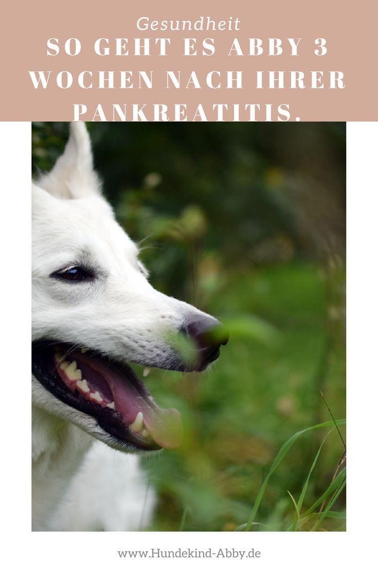 #Hund #Hundeblogger #Hundeliebe #Wissen #Gesundheit Hunde    Erziehung    DIY    Wissen    Gesundheit