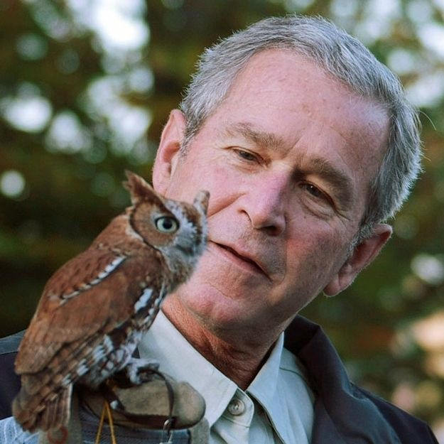 He is clearly as fascinated by tiny, tiny owls as we are. | 15 Reasons George W. Bush Should Come Work For BuzzFeedAnimals