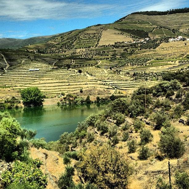 Douro Valley, Portugal ~ overlook from Quinta De Seixo, the source of Sandeman port wine ~ UNESCO World Heritage Site