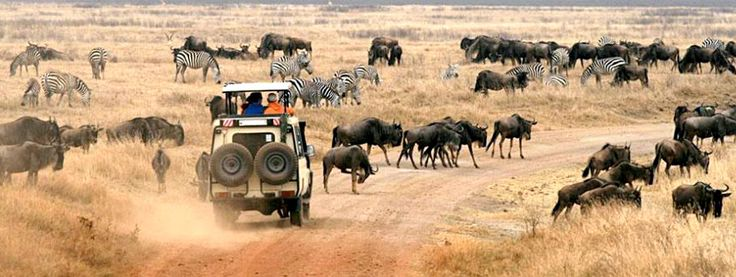 #KenyaSafaris would take you to Kenya, a land at the heart of the East Africa, straddling the equator known as the wild life documentary heaven and sunbather's paradise. Check out more @ http://www.kenya-safaris.co/