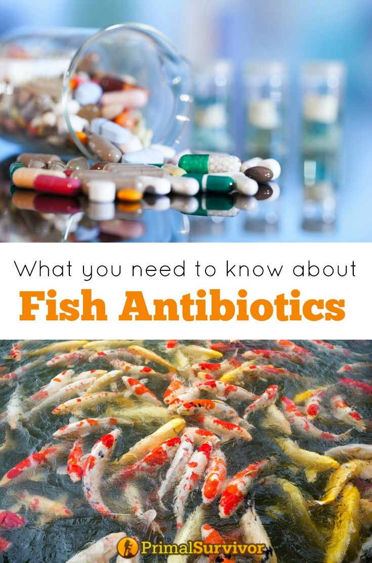 627 best images about must print on pinterest off the for Fish antibiotics for humans