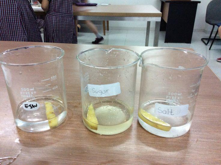 Potato experiment to show osmosis.