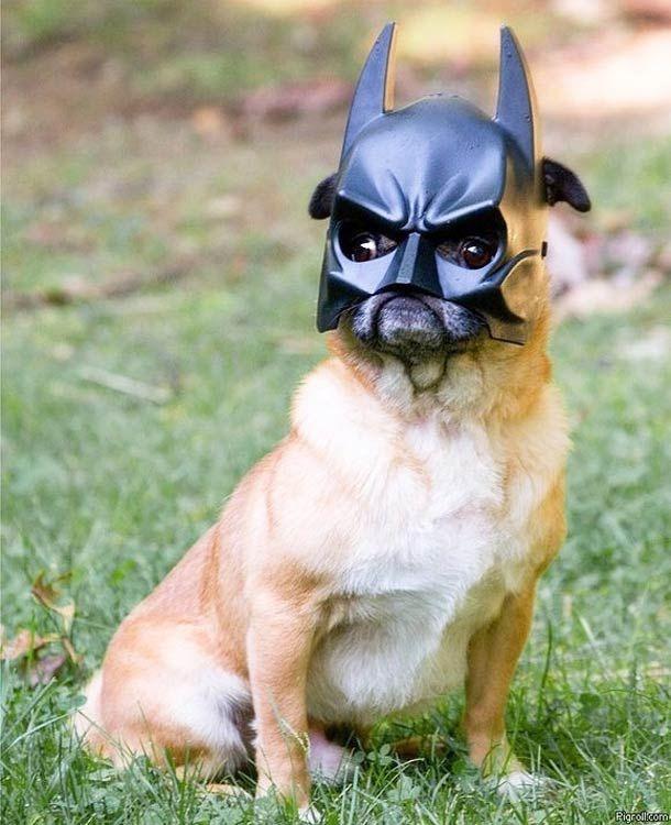I am ... Batman!