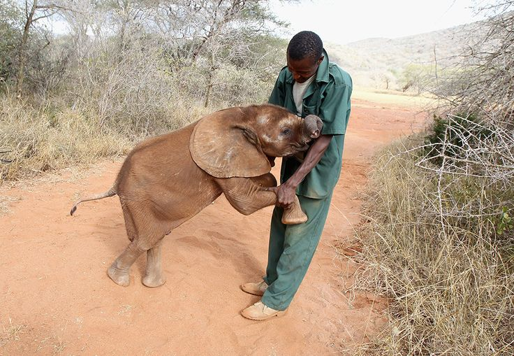 72 Incredible Elephant Facts That Will Make You Want To Save Them (insert tears)