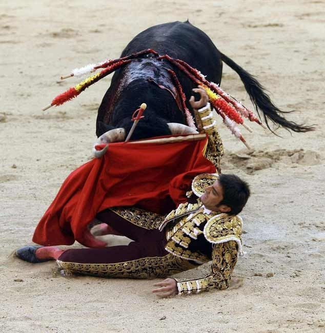 corrida, three toreros, also called matadores or, in French, toréadors, each fight two out of a total of six fighting bulls, each of which is at least four years old and weighs up to about 600 kg or 1,300 lb (with a minimum weight limit of 460 kg or 1,010 lb for the bullrings of the first degree). Bullfighting season in Spain runs from March to October