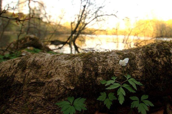 "Photo ""Flowerbythelake"" by Flemming"
