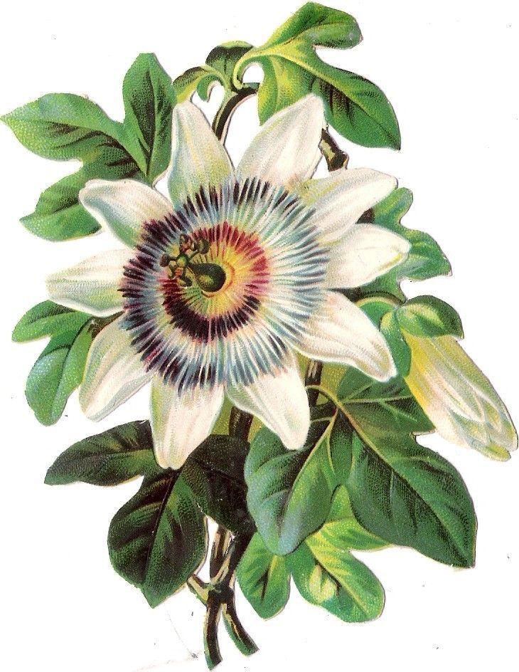 Oblaten Glanzbild scrap die cut chromo Blume 12cm  flower fleur: