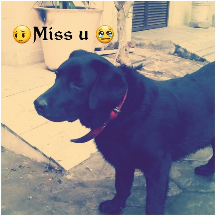 I miss u my boozo  Luv u