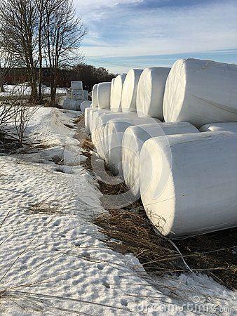 Hay bales at the arable
