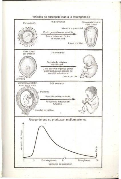 embriologia medica Langman - embriologia médica humana