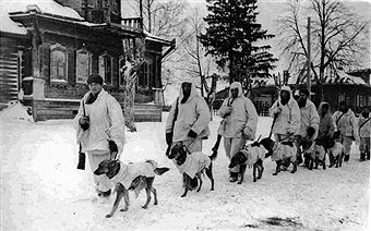 Image shows Soviet soldiers with explosives-laden Anti-Tank Dogs walking through the snow. Taken during the Battle of Moscow, 1941. Pin by Paolo Marzioli