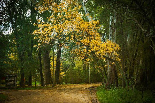 Autumn in Argentina. http://fineartamerica.com/featured/autumn-in-santa-rosa-de-calamuchita-nelieta-mishchenko.html