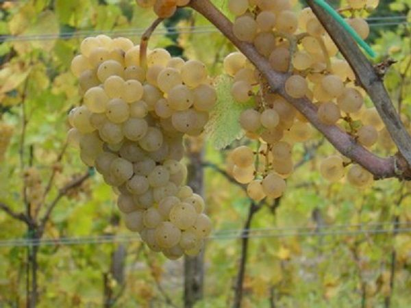 Blog about wine, wine-seller, places  and zones in Italy
