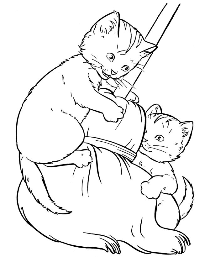 pet cat coloring page kittens play with a broom - Coloring Pages Cats Kittens