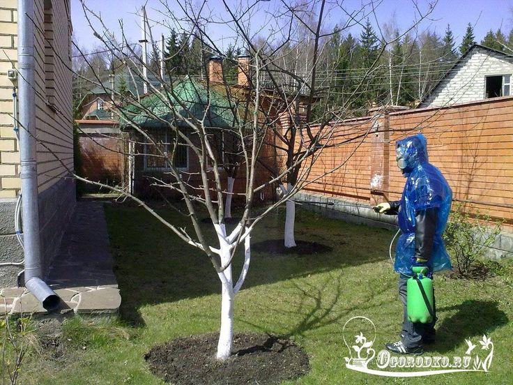ПОДГОТОВКА ПЛОДОВЫХ ДЕРЕВЬЕВ К ЗИМЕ    1. Накормить Сытым растениям никакой мороз нипочем! Поэтому очень важно удобрять их по всем правилам. Особенно важны две подкормки: в июле, когда у деревьев и кустарников наступает вторая волна активного сокодвижения (первая в апреле), и осенью, когда они запасают питательные вещества на зиму. Если в середине лета вы по каким-то причинам не накормили свой сад — это плохо. Но не смертельно. А вот осенние подкормки пропускать никак нельзя! В это время…