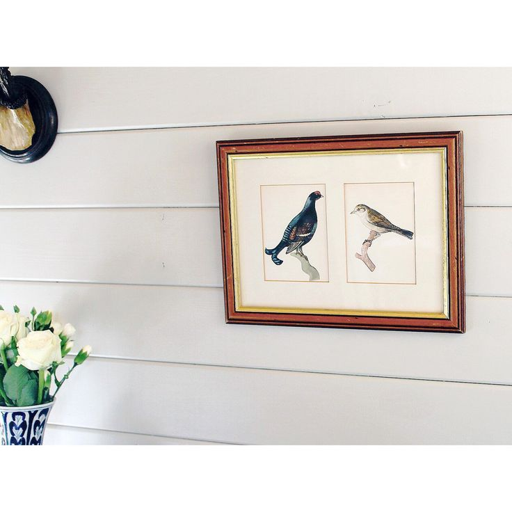 Framed Mounted Vintage Bird Print Picture of Black Grouse and Garden Warbler, Wall Art by GemmaLowlesDesigns on Etsy https://www.etsy.com/uk/listing/508538657/framed-mounted-vintage-bird-print