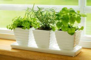 Brighten up any recipe with an indoor (or outdoor!) herb garden.