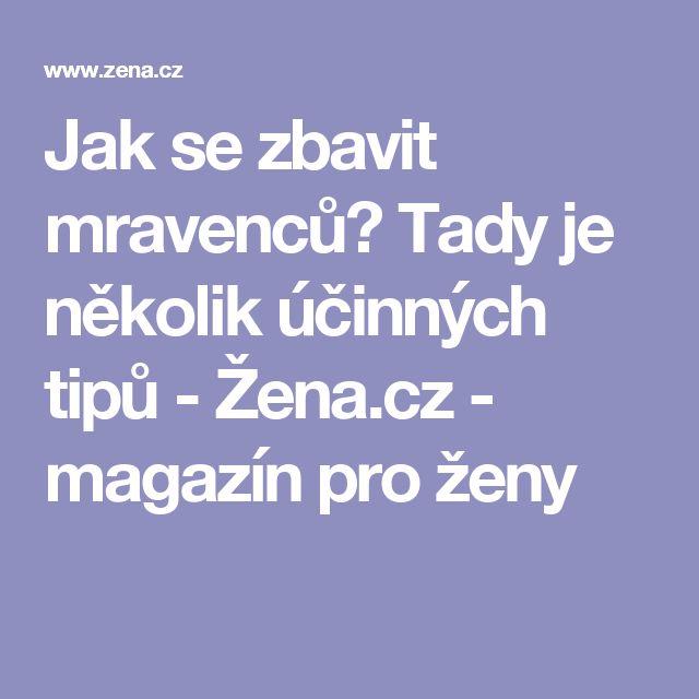 Jak se zbavit mravenců? Tady je několik účinných tipů - Žena.cz - magazín pro ženy