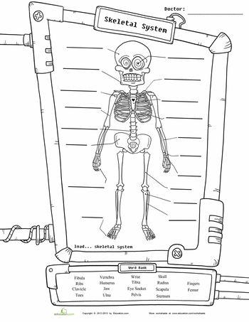 Best 25+ Human skeleton for kids ideas on Pinterest