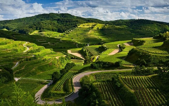 vineyards-Beautiful natural scenery