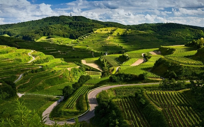vineyards-Beautiful natural scenery