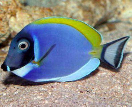 71 best finding dory fans images on pinterest finding for Finding dory fish tank