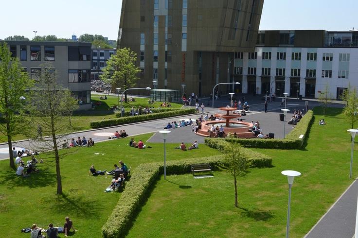 Zernike campus in summer