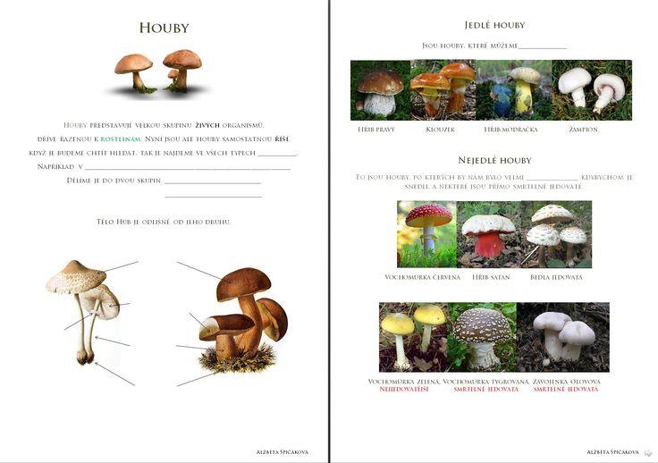 Živá příroda - Houby
