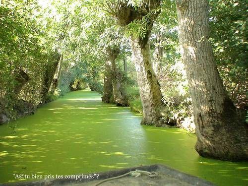 Marais poitevin #vert #renaud-bray #green