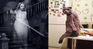 5 Telltale Signs That Your Cat Can See Ghosts