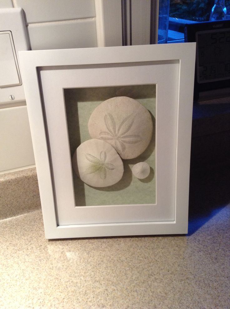 Sand dollars found in Tofino - DIY in a shadow box