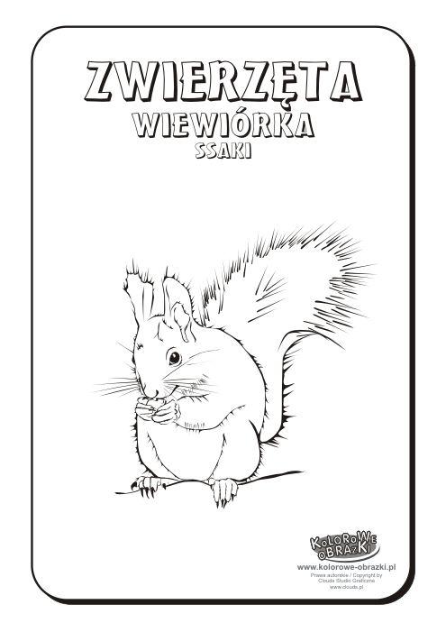 Wiewiórka kolorowanka | Kolorowanki dla dzieci