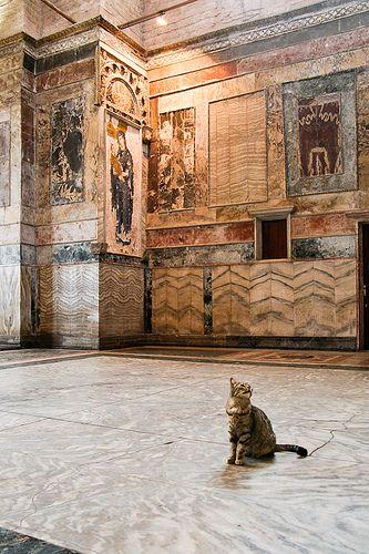Tourist cat in Chora Church, Istanbul.