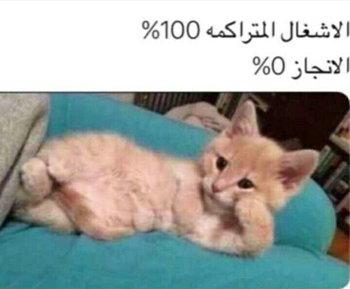 Pin By Miss Bosi On Funny اضحك Funny Picture Jokes Funny Cute Silly Memes