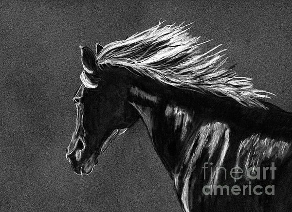 Black and white horse charcoal drawing by Tracey Everington of Tracey Lee Art Designs