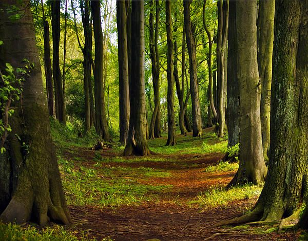 In the Wizard's Woods