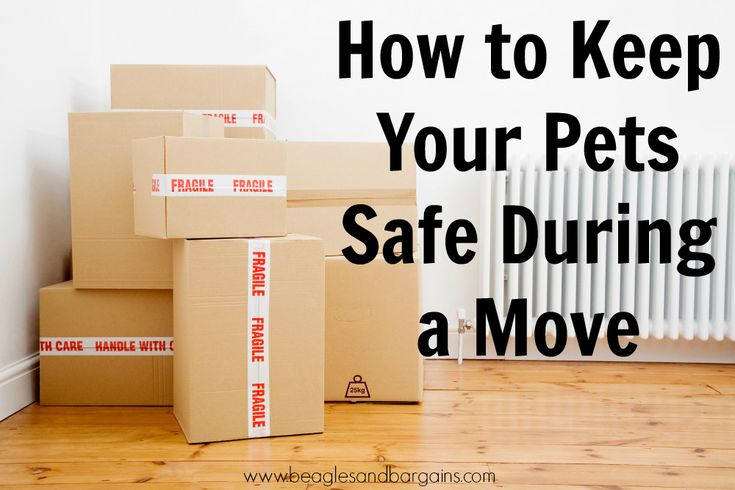 How to Keep Your Pets Safe During a Move. July is Lost Pet Prevention Month. Join the conversation on lost pets! | http://www.beaglesandbargains.com/keep-your-pets-safe-during-move/