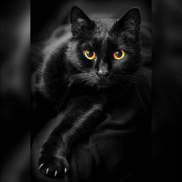 Los egipcios creían que los ojos amarillos de los gatos negros guardaban el poder del sol
