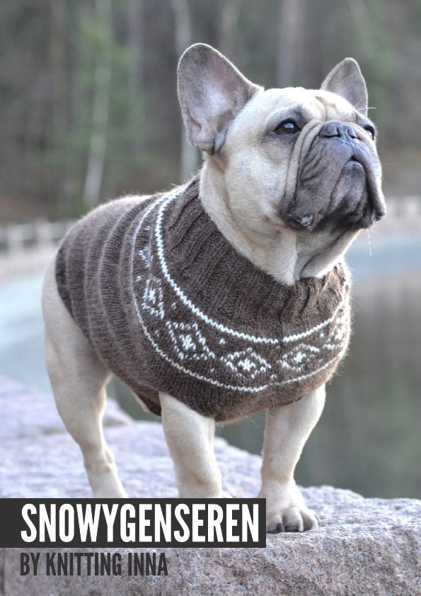 Knitting Patterns For Bulldog Sweaters : 1000+ ideas about Dog Sweaters on Pinterest Dog sweater pattern, Small dog ...