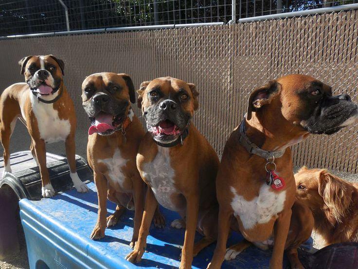 Good Ribbon Bow Adorable Dog - 3f7fd03ce46cc499e2c599eb9cc843f2--bow-wow-camps  Graphic_216745  .jpg
