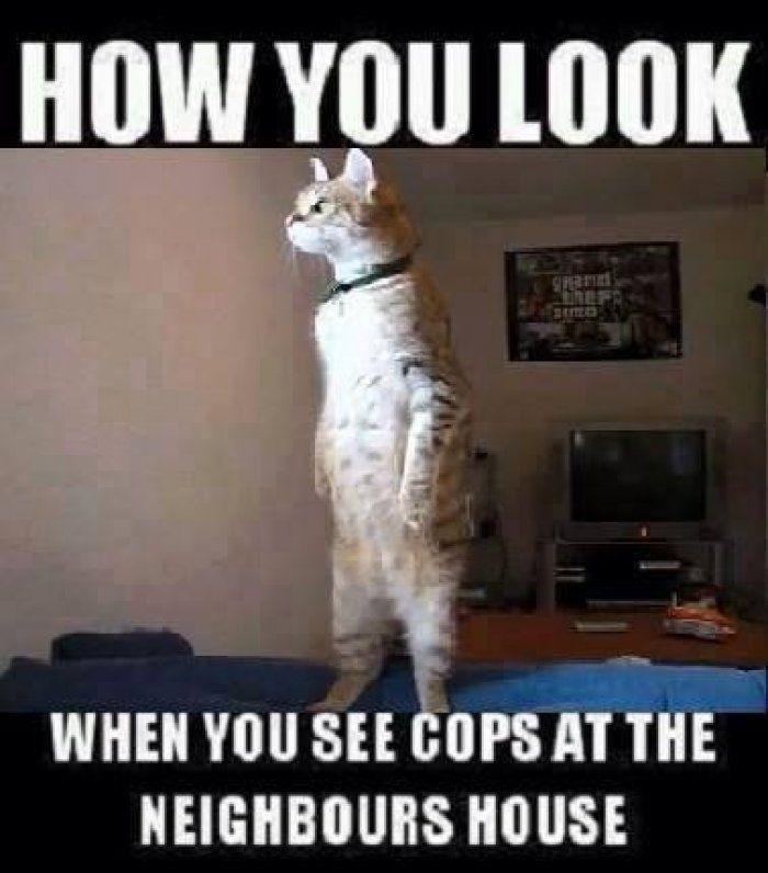 How you look - cat meme - Funny Dirty Adult Jokes, Memes, Cartoons ...