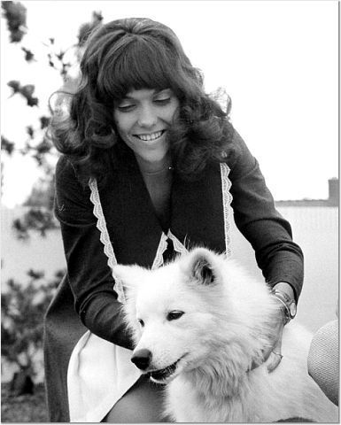 "#Samoyed fans include actor Denis Leary and the late musician Karen Carpenter, pictured here with her sammy named ""Mush"""