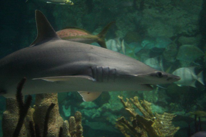 Sea Life Aquarium (Auburn Hills)
