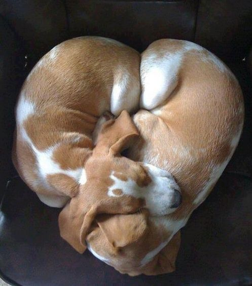 a puppy heart! oh my goodness. they almost look like my Giya!!!