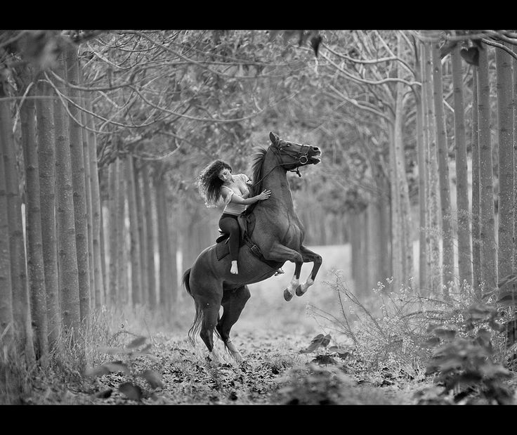 Famous Black And White Horse Photography