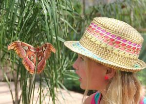 Fragile and Beatuful, They Thrive at Butterfly Wonderland in Scottsdale: Here's My Take on Butterfly Wonderland