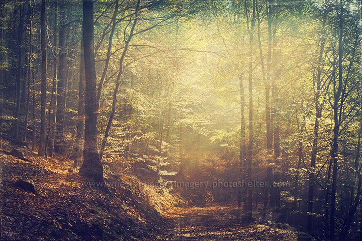 l u m i n a n c e  #: Luminous Forests, Photo Ideas, Autumn Leaves, Pinterest Photographers, Art Prints, Luminous Art, Artflak Com, Buy Luminous, Nice Photo